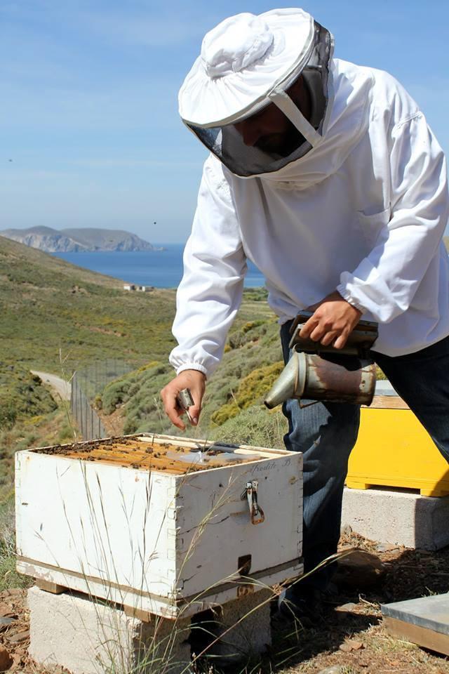 Bienenzucht in Psara