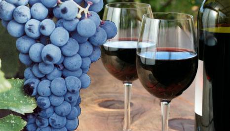 Κρασί Μαυροδάφνη