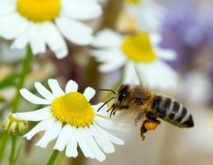 Bee harvesting flowers